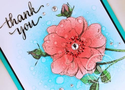 052316web_thanks2